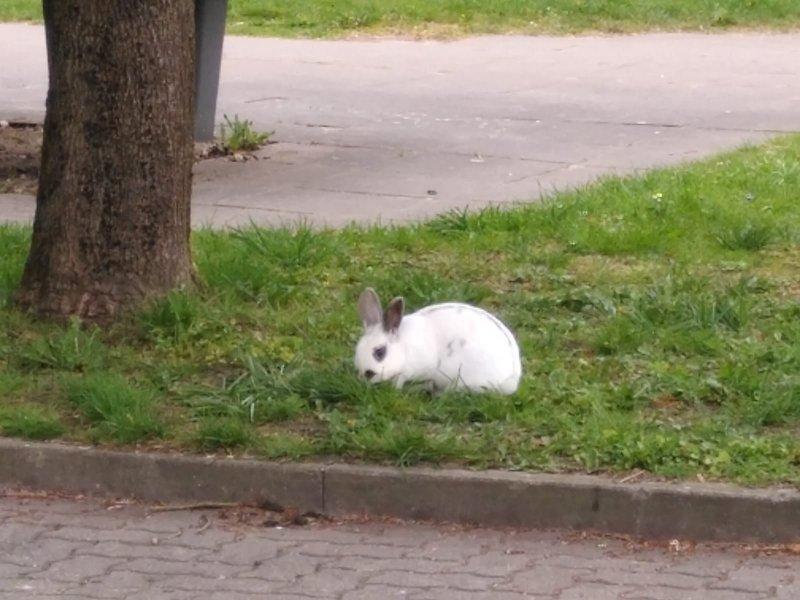 Kaninchen Kiel